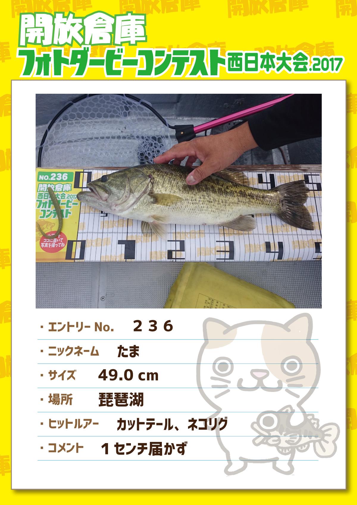 No.236 たま 49.0cm 琵琶湖 カットテール、ネコリグ 1インチ届かず