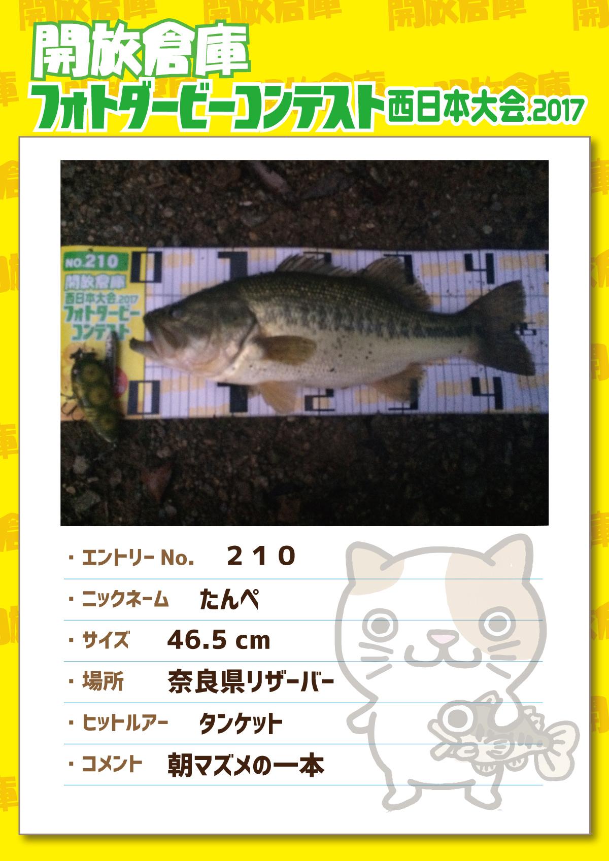 No.210 たんぺ 46.5cm 奈良県リザーバー タンケット 朝マズメの一本