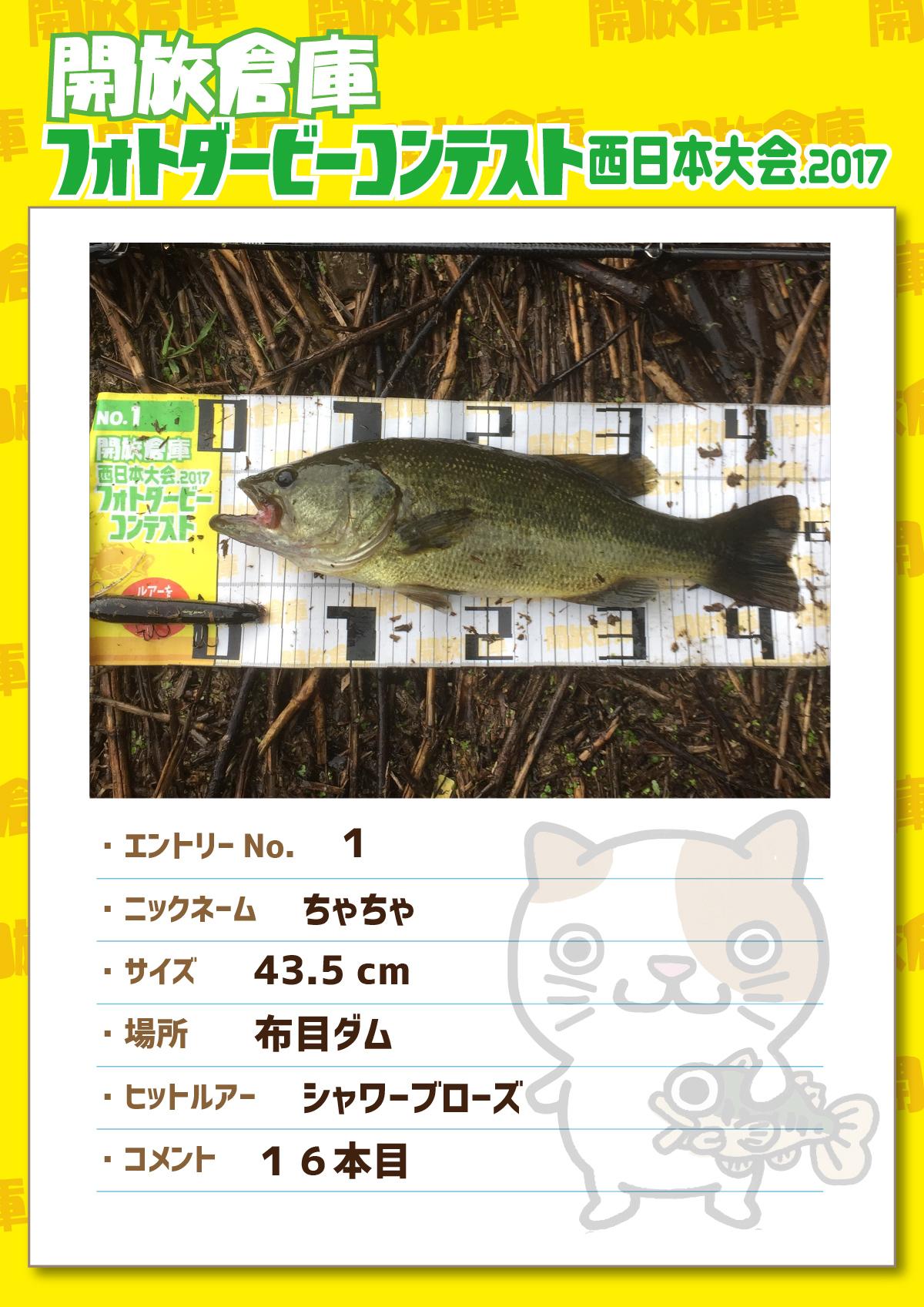 No.001 ちゃちゃ 43.5cm 布目ダム シャワーブローズ 16本目