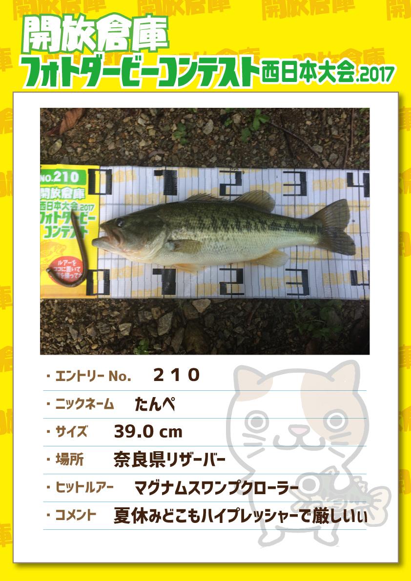 No.210 たんぺ 39.0cm 奈良県リザーバー マグナムスワンプクローラー 夏休みどこもハイプレッシャーで厳しいぃ