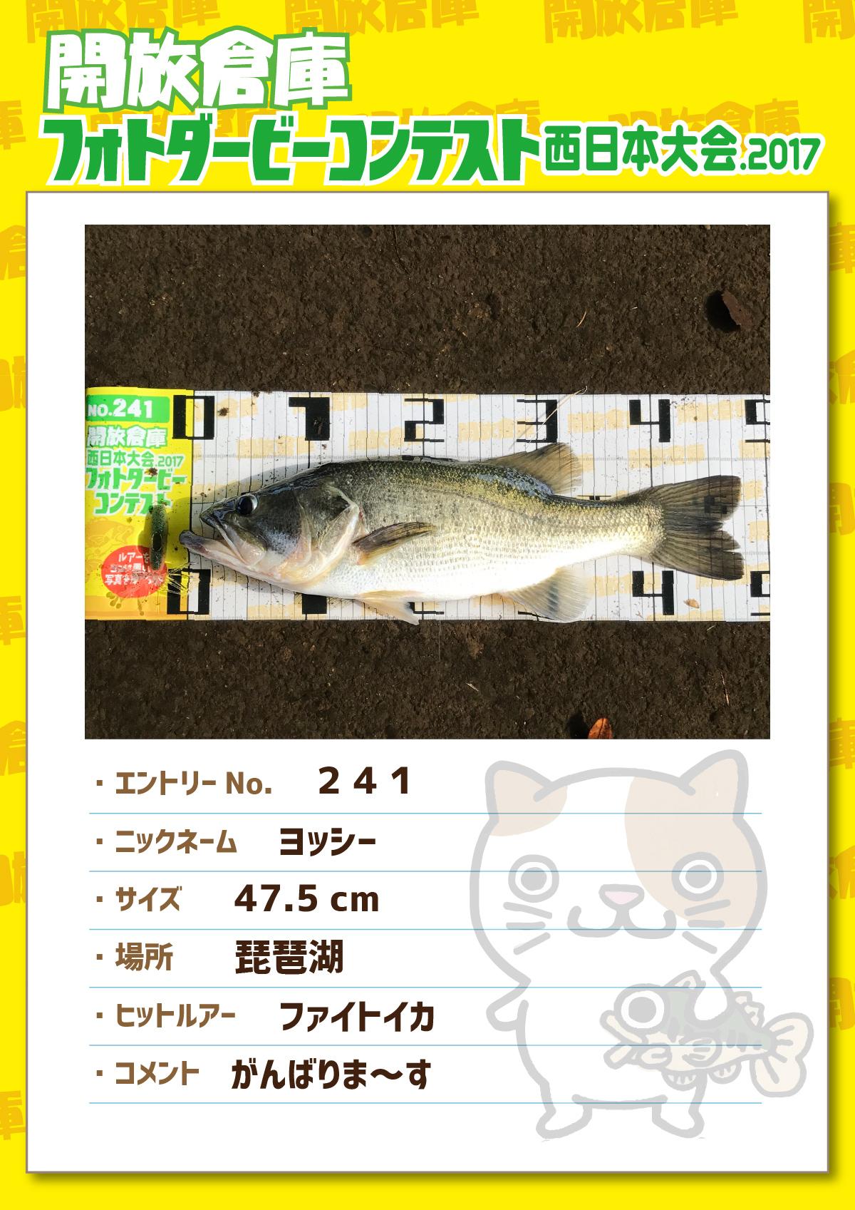 No.241 ヨッシー 47.5cm 琵琶湖 ファイトイカ がんばりま~す