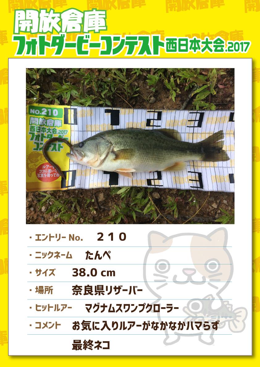 No.210 たんぺ 38.0cm 奈良県リザーバー マグナムスワンプクローラー お気に入りルアーがなかなかハマらず最終ネコ