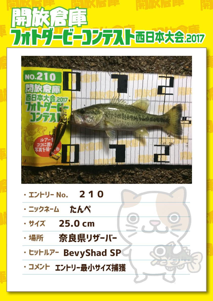 No.210 たんぺ 25.0cm 奈良県リザーバー BevyShadSP エントリー最小サイズ捕獲