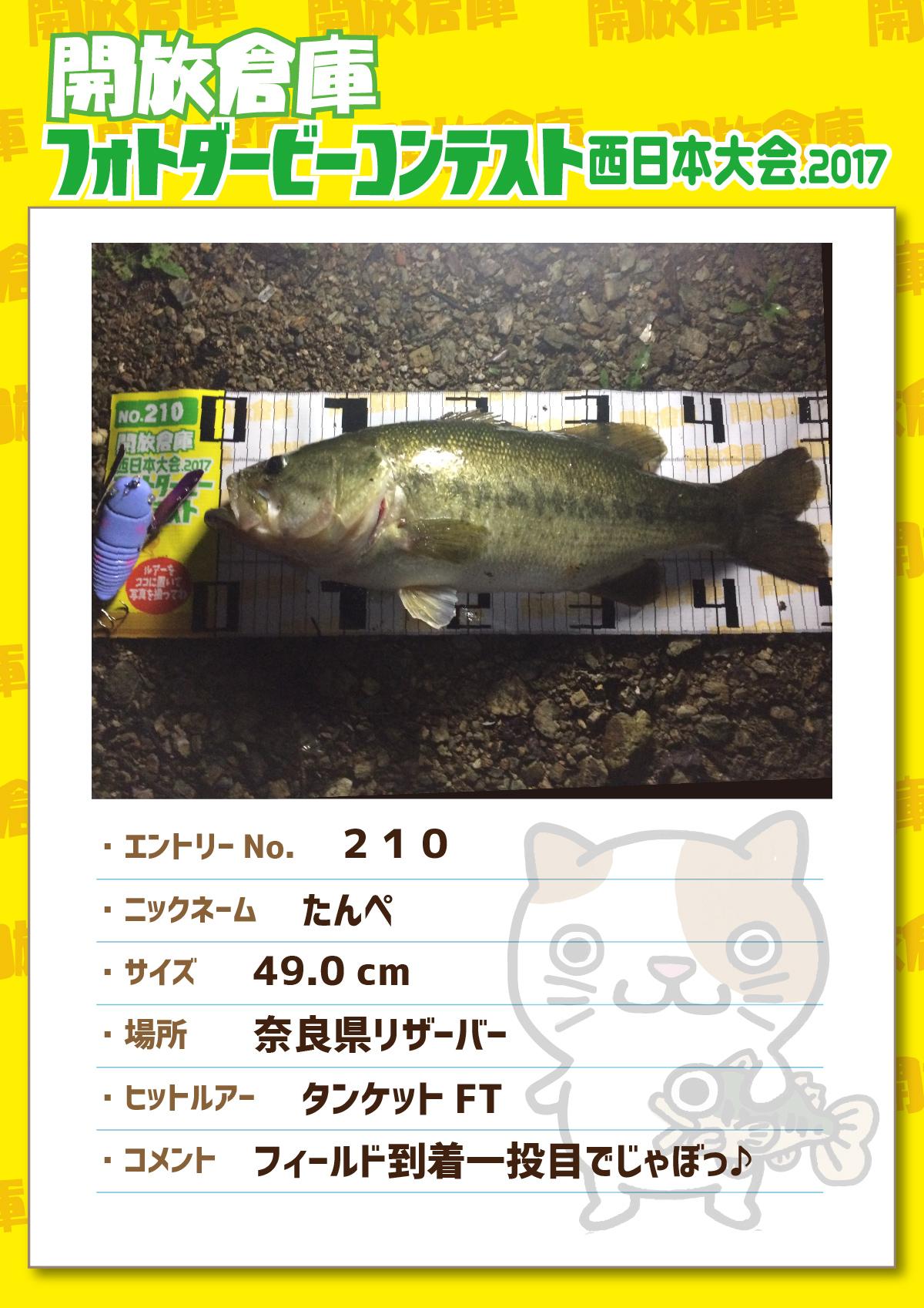 No.210 たんぺ 49.0cm 奈良県リザーバー タンケットFT フィールド到着一投目でじゃぼっ♪